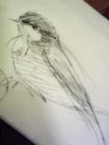 今日の小鳥さん